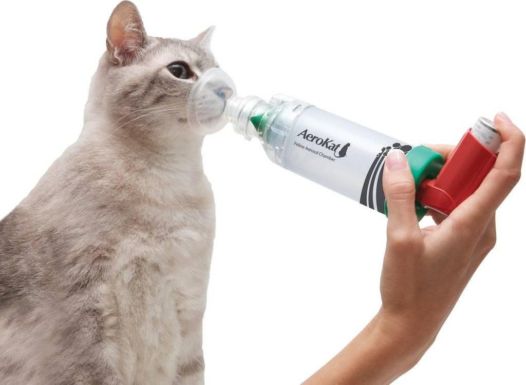 Астма.  клиническая картина астмы и астматического статуса.