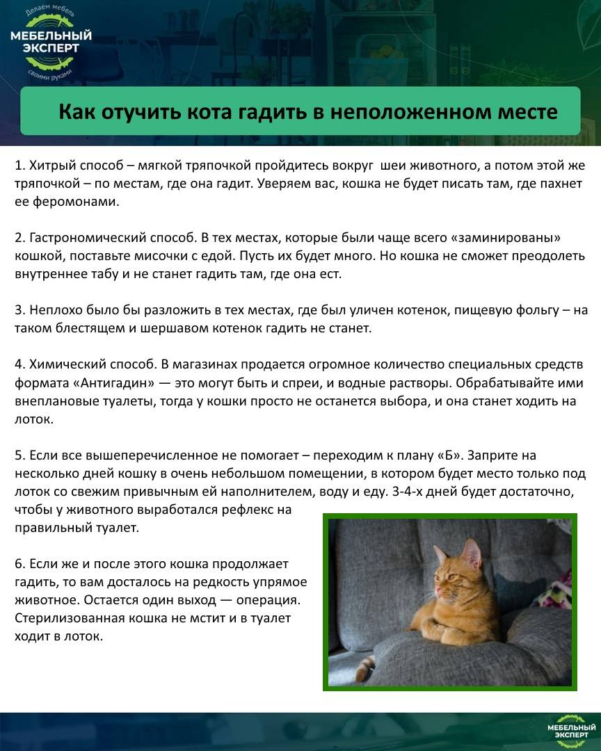 Как отучить кота или кошку гадить в неположенном месте: советы специалистов по отучению котят и взрослых животных, народные средства