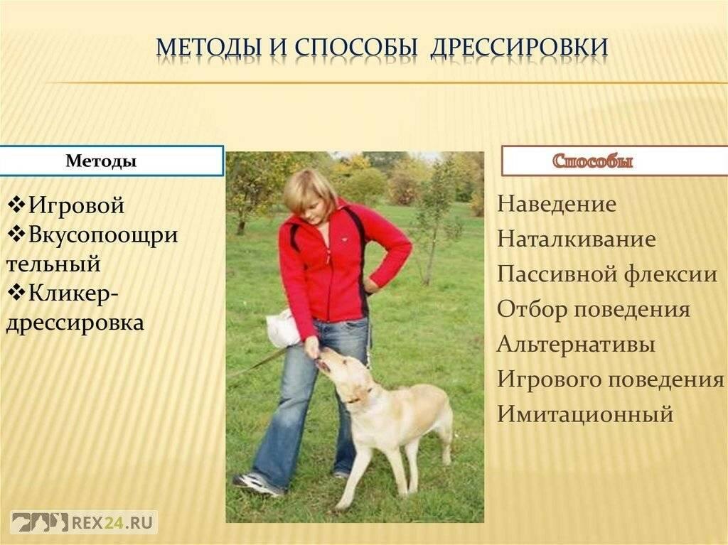 Порода собаки английский той терьер: характеристики, фото, характер, правила ухода и содержания