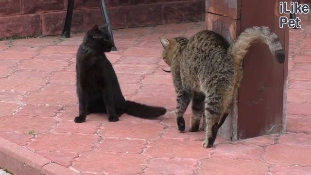 Сальмонеллез у кошек: симптомы и лечение