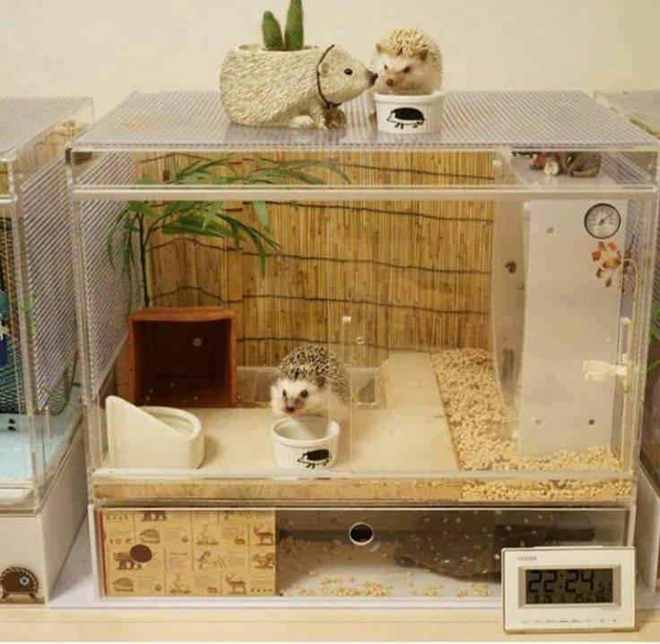 Домик для крыс: как выбрать готовый или сделать своими руками - люблю хомяков