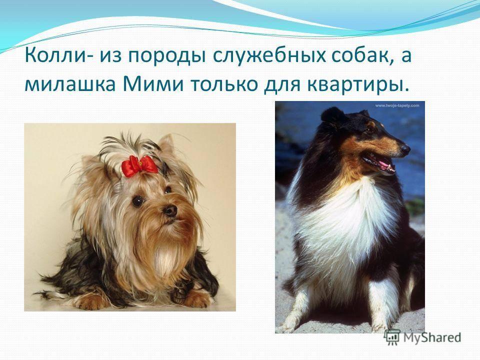 Лучшие породы собак подходящие пожилым людям