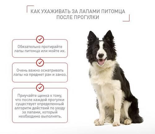 Когда нужно кормить собаку (до или после прогулки) | все о собаках