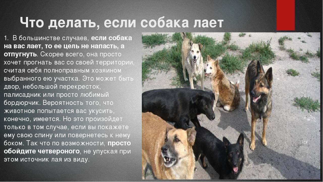 Что делать, если соседи жалуются на лай собаки, является ли он нарушением закона