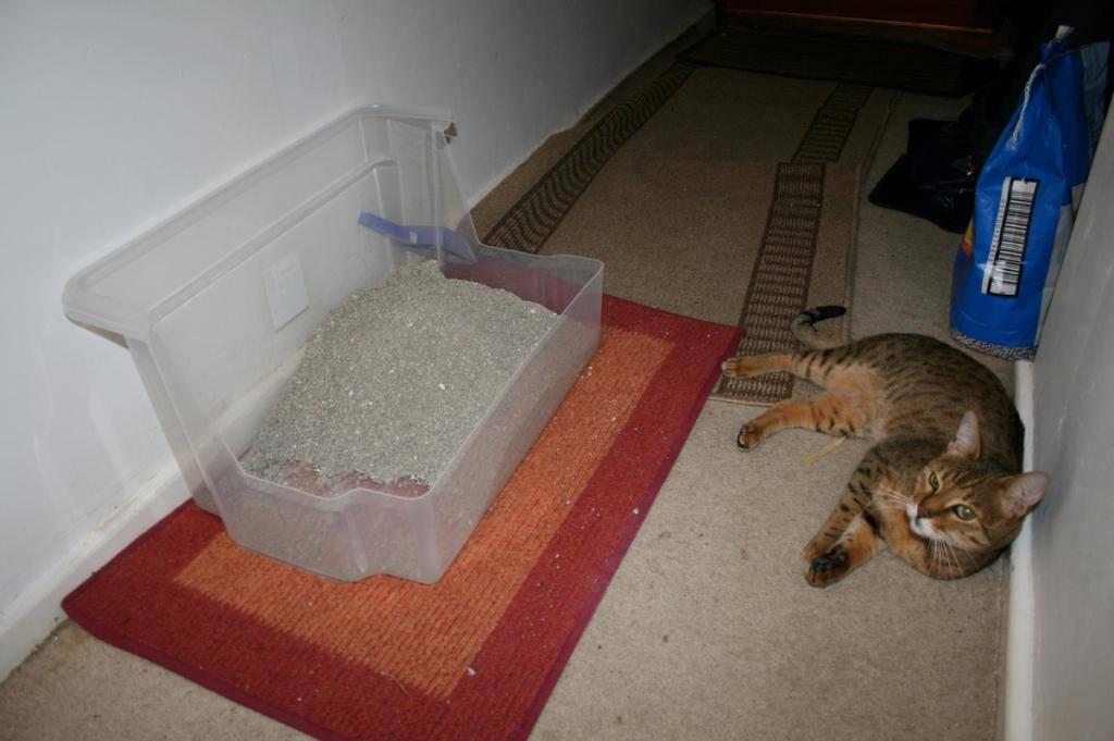 Кошка стала гадить где попало, что делать: как отучить