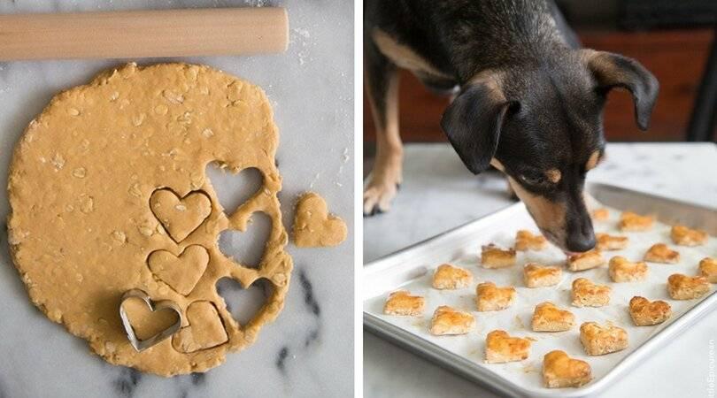 Лакомства для собак своими руками: как сделать вкусняшки из печени и легкого в домашних условиях? рецепты приготовления натуральных лакомств