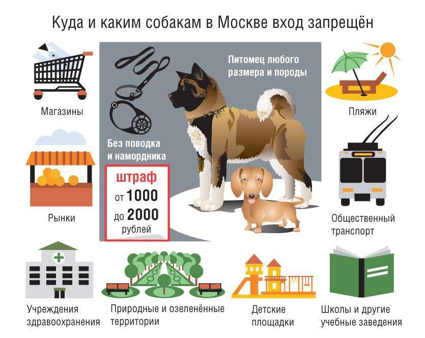 Закон о содержании собак | в частном секторе и многоквартирном доме в рф