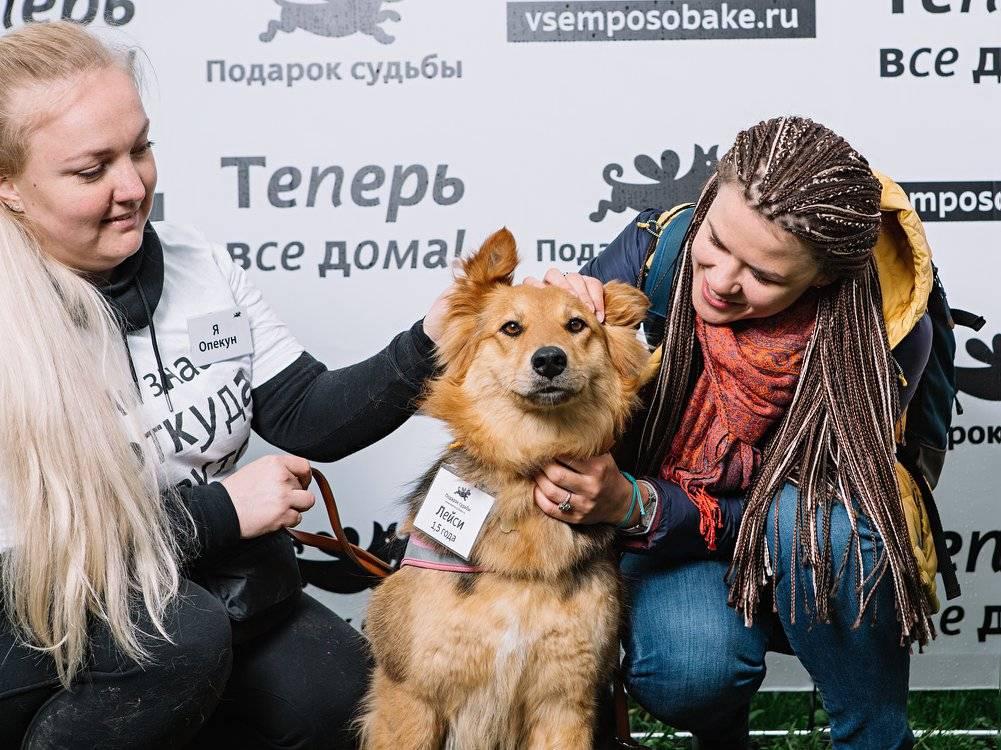 «четвероногий друг»: на фестивале «пасхальный дар» помогут животным