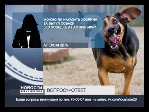 Выгул собаки без намордника или поводка: штраф по статье закона (коап, ук, гк)