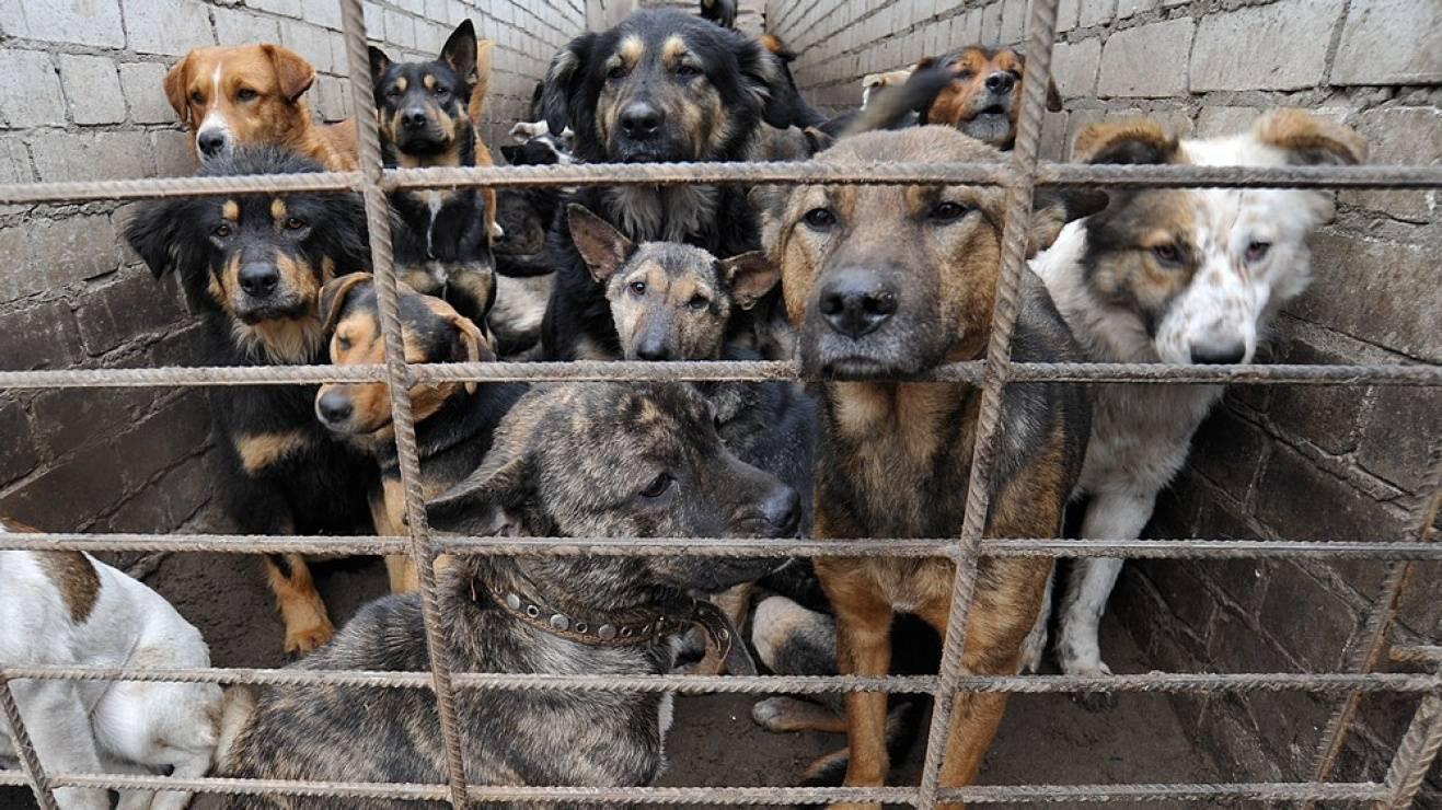 Собачий бизнес: за шесть лет на отлов бродячих животных в улан-удэ ушло 80 миллионов рублей