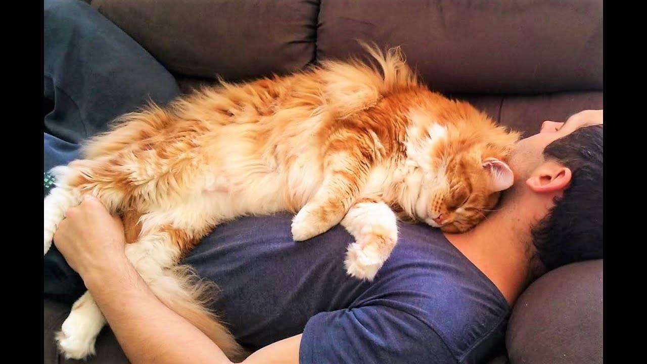 Почему кошки любят спать в ногах?