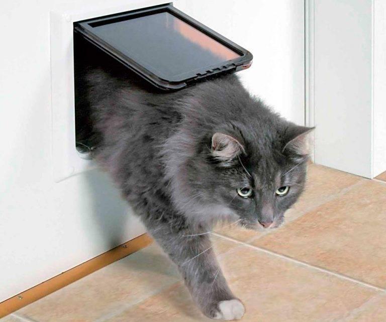 Виды и выбор дверцы для кошки