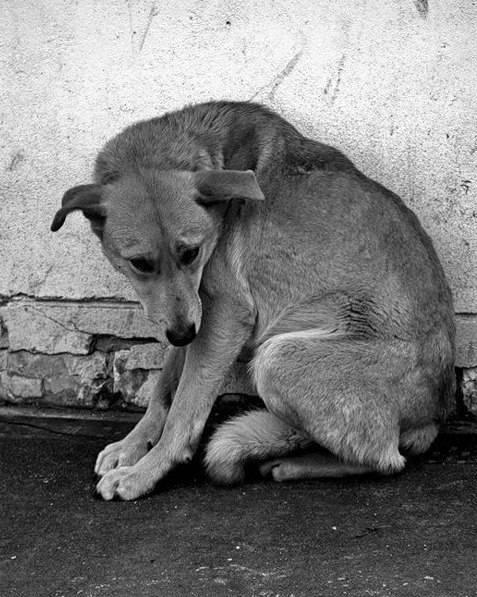 Почему собака грустит