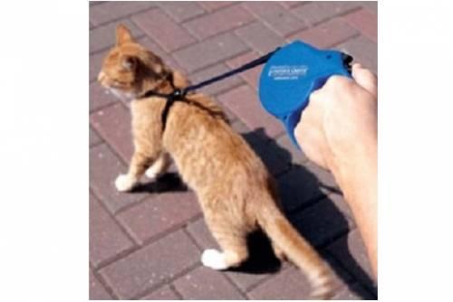 Как правильно взять кошку с улицы