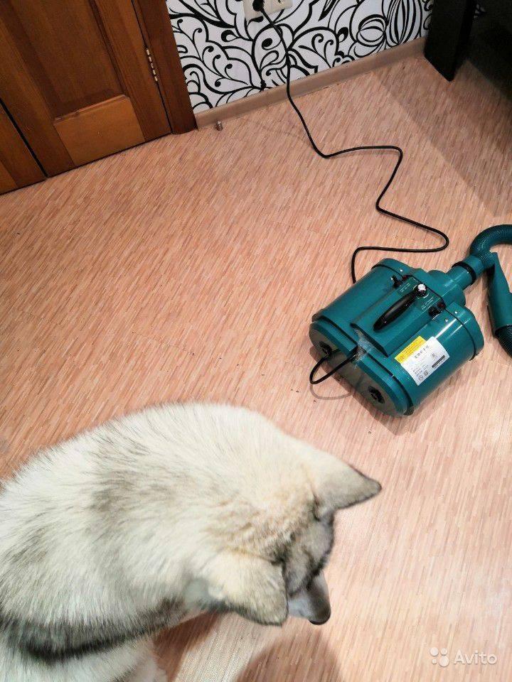 Ошейник форесто для собак: инструкция по применению, цена, отзывы