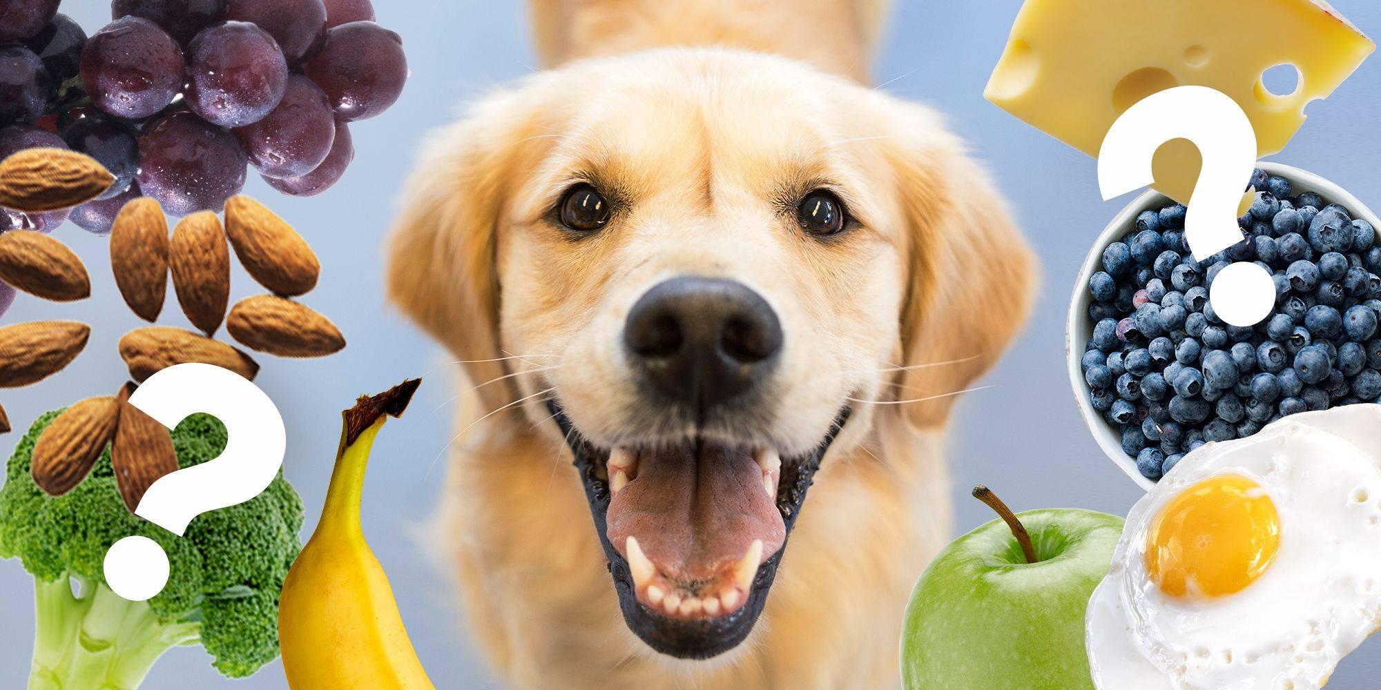 Чем нельзя кормить собаку: запрещенные и опасные продукты