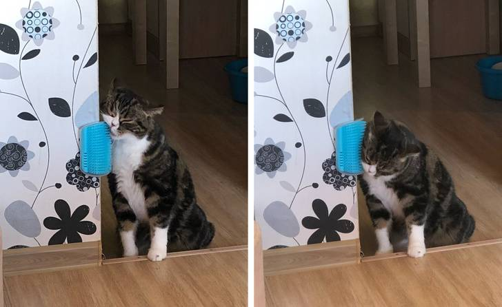 Лайфхаки по уходу за кошками
