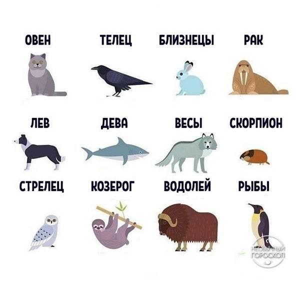 Какие домашние животные подходят разным знакам зодиака: новости, животные, гороскопы, астрология, советы, психология