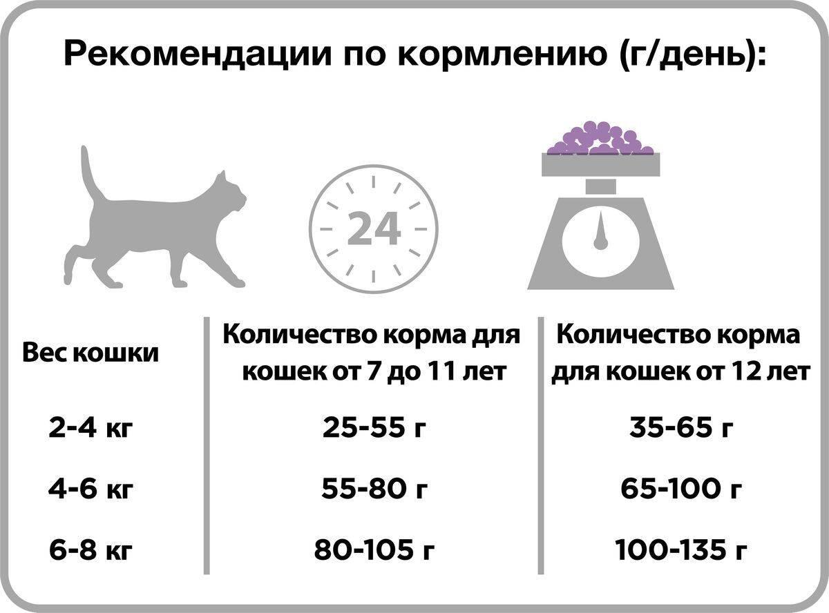 Нормы корма для кошек: сколько корма нужно кошке