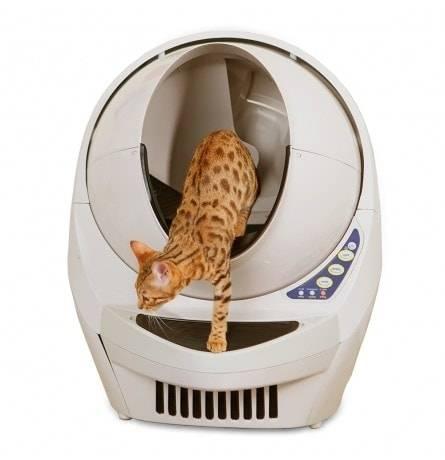 Умный автоматический туалет для кошек: особенности разных моделей