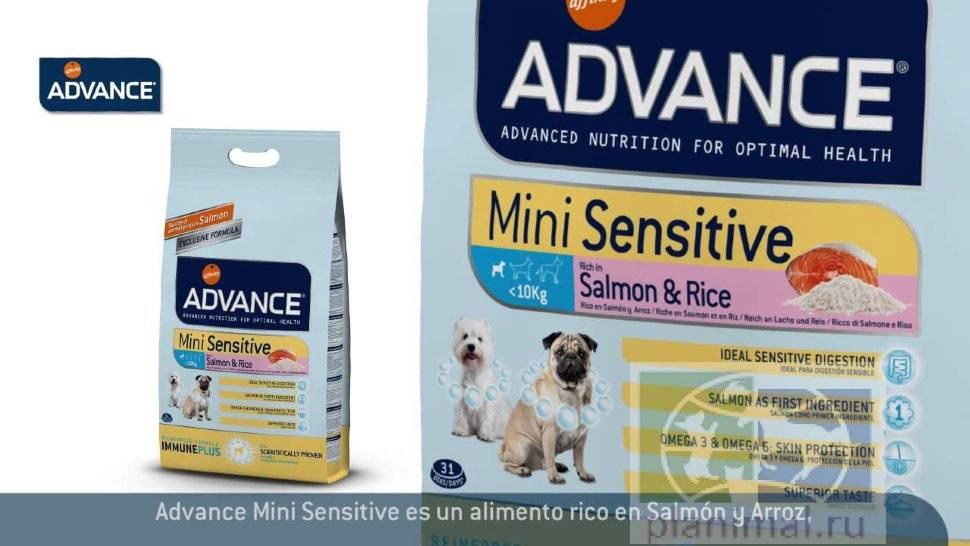 Advance корм для собак: виды, отзыв ветеринара на состав