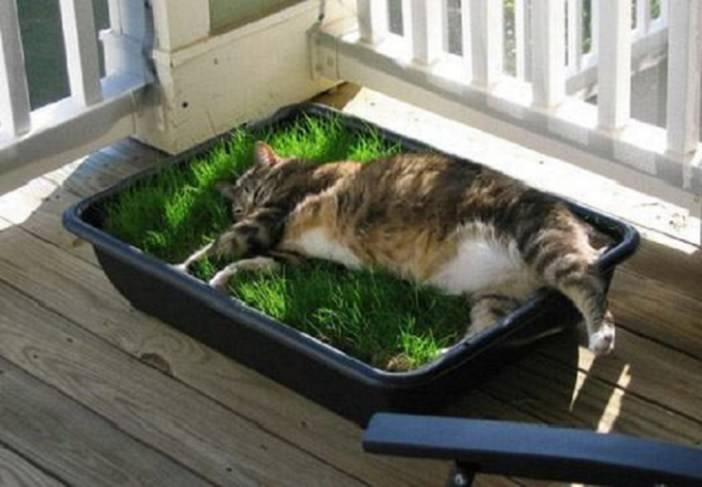 Трава для кошек: какая любимая, как посадить и вырастить |