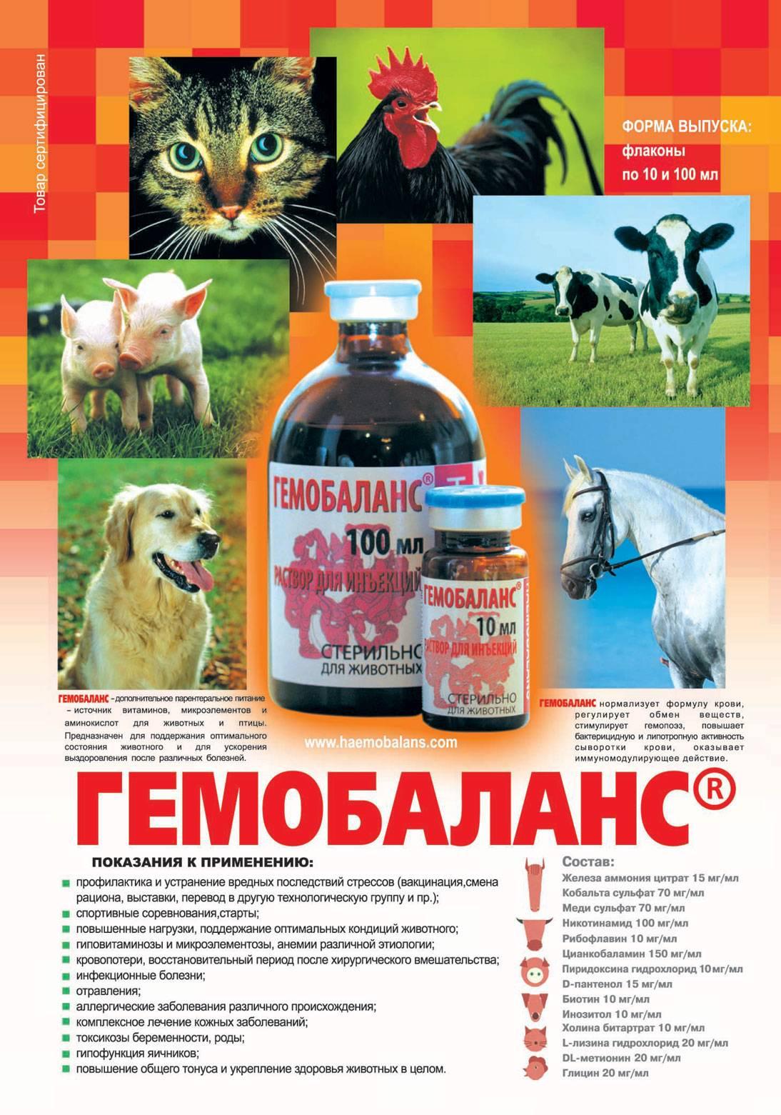 Гемобаланс для кошек в ветеринарии: инструкция по применению, цена