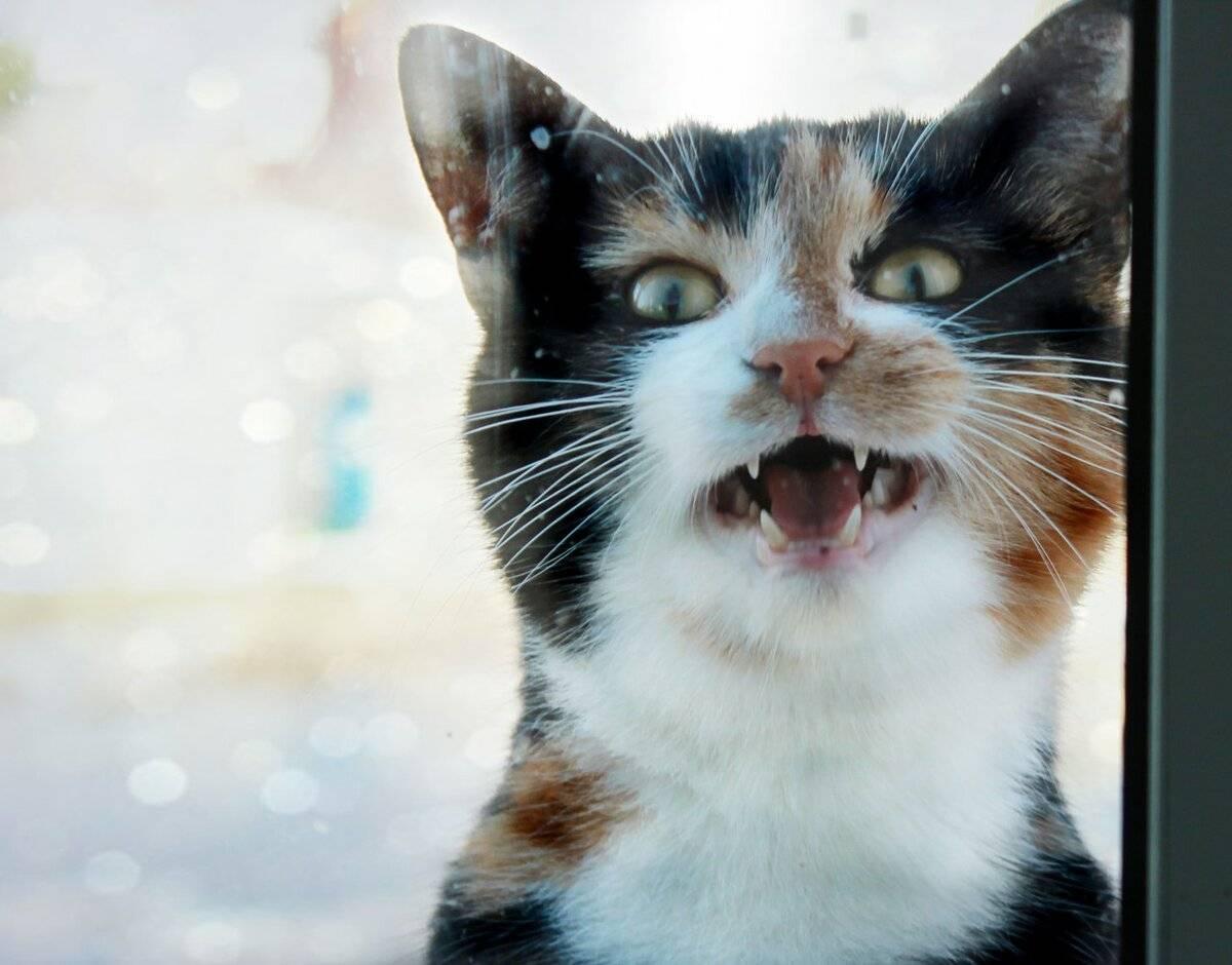 Кошачья полифагия — или почему ваша кошка постоянно хочет есть?