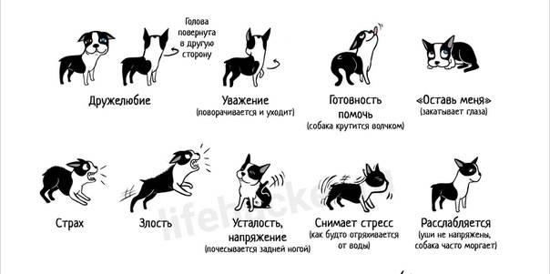 Как общаются собаки и что они могут нам «сказать»?