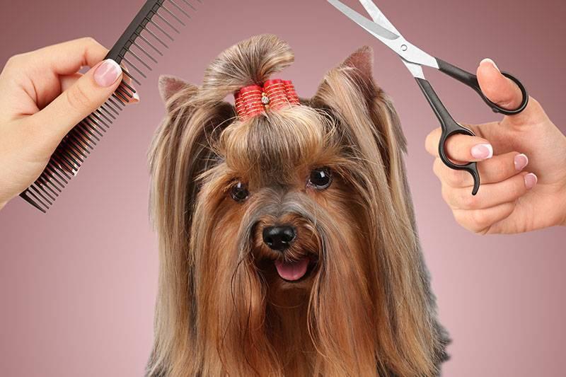 Как подстричь собаку самостоятельно? советы хозяину | royal groom