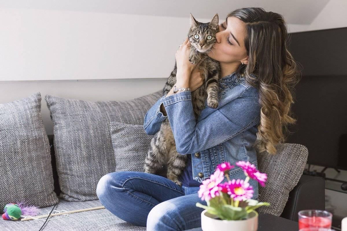 5 признаков что кошка вас любит. пять признаков того, что ваша кошка действительно вас любит
