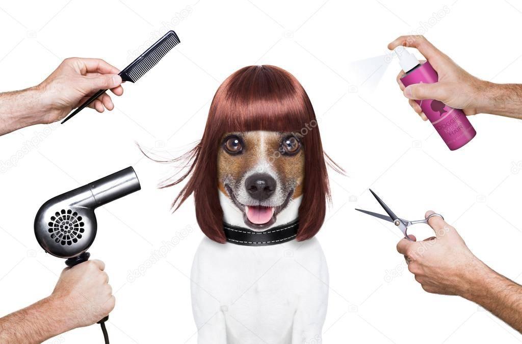 Грумер (13 фото): что это за профессия? как обучиться работе грумером? сколько зарабатывает парикмахер для собак и других животных?