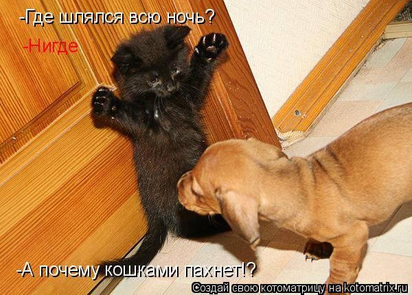 Красивые породы кошек, от которых не будет запаха и шерсти в доме