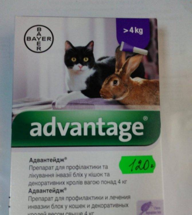 Адвантейдж для кошек: инструкция и показания к применению
