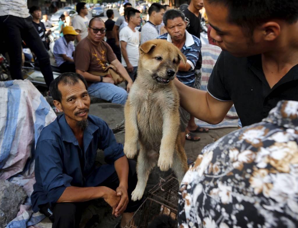 Порода собаки, которую едят. какую собаку едят в корее? - petstime.ru