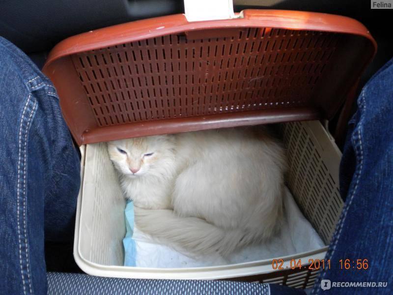 Как перевезти кошку на дальнее расстояние с минимальными осложнениями? | дети фауны