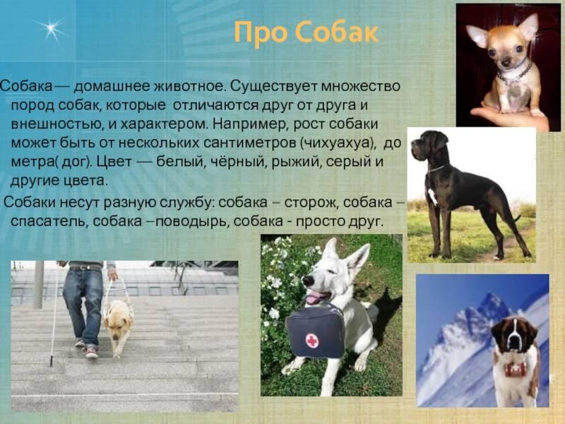 Московская сторожевая собака. описание, особенности, уход и цена породы   sobakagav.ru