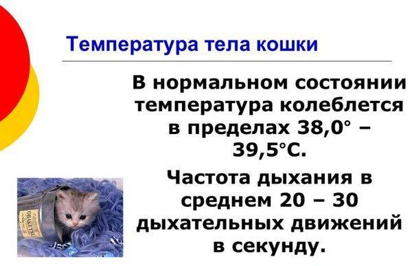 Как понять что у кошки температура: признаки, измерение