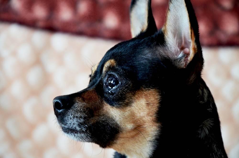 Почему собака воет, когда остается дома одна? ответ на вопрос