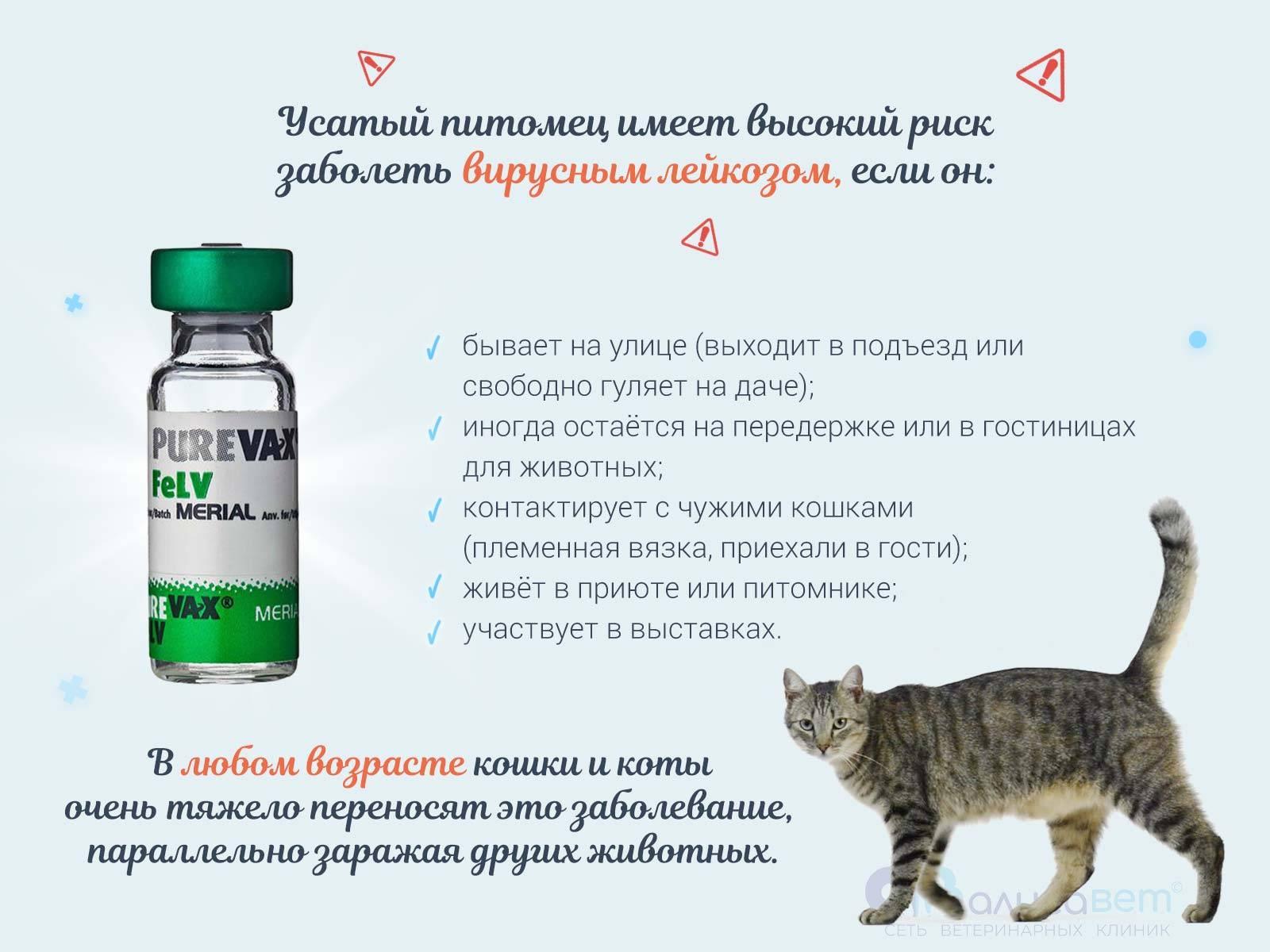 Лейкоз у кошек