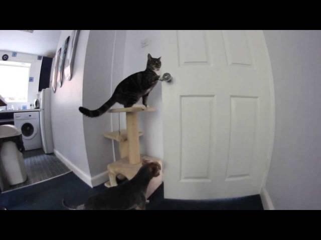 Почему кот открывает шкафы