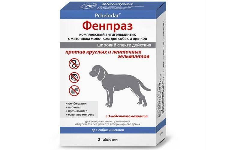 Интерспектин-l для собак: показания и инструкция по применению, отзывы, цена