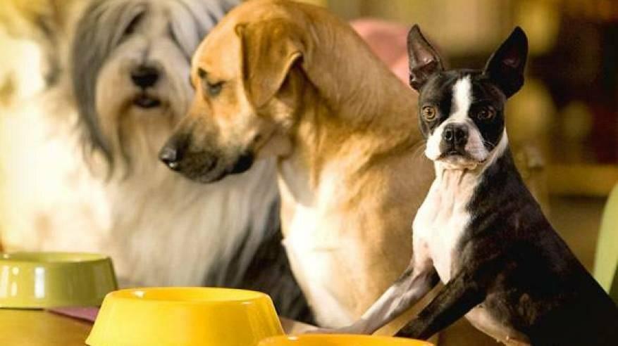 Режим кормления собак. частые ошибки при кормлении | дети фауны