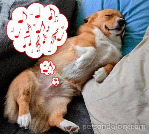 """Вздутие живота у собаки - причины и лечение. ветеринарная клиника """"зоостатус"""""""