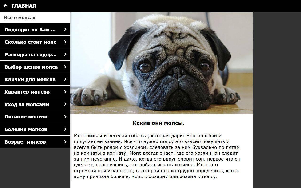 Мопс: описание и характеристика породы
