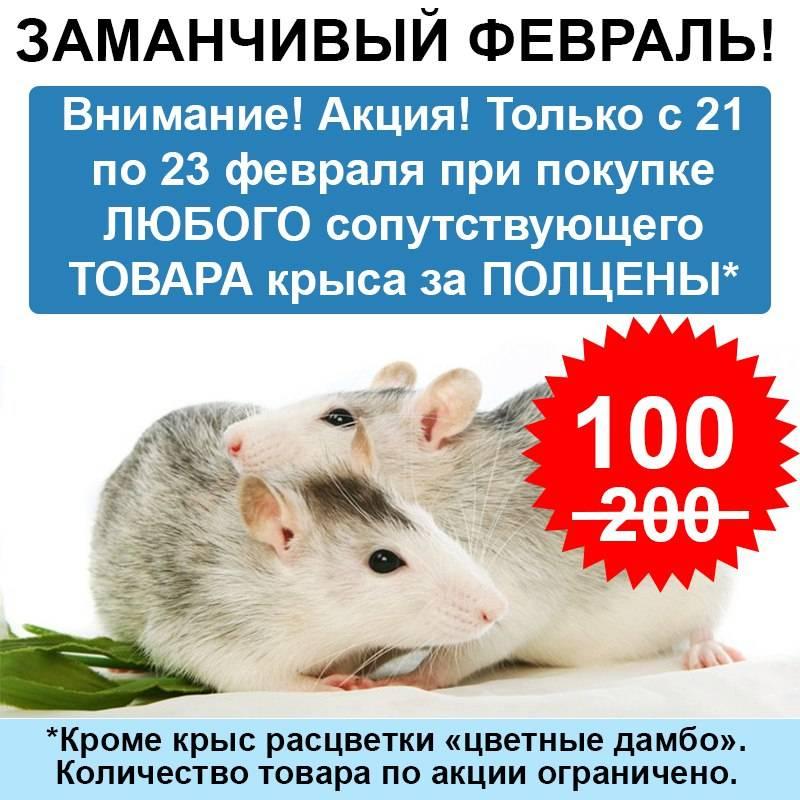 Рейтинг лучших кормов для декоративных крыс в 2021 году