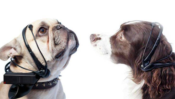Переводчик с собачьего на человеческий | бизнес-прост