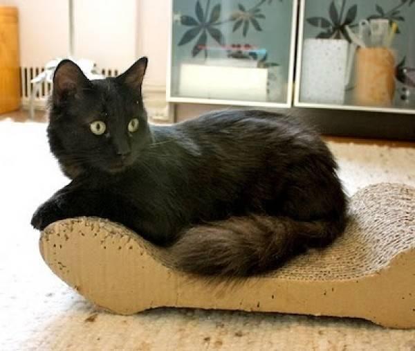 Кошка као мани: описание внешности и характера, разные глаза, уход за питомцем и его содержание, выбор котёнка, отзывы владельцев, фото кота