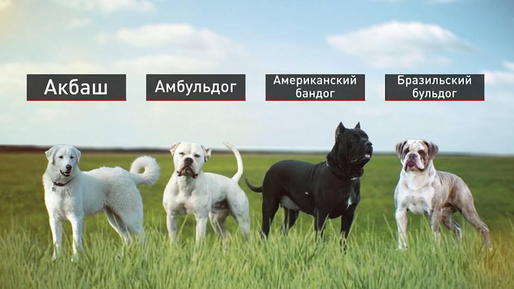 13 пород собак в списке мвд - список, правила, санкции за нарушения