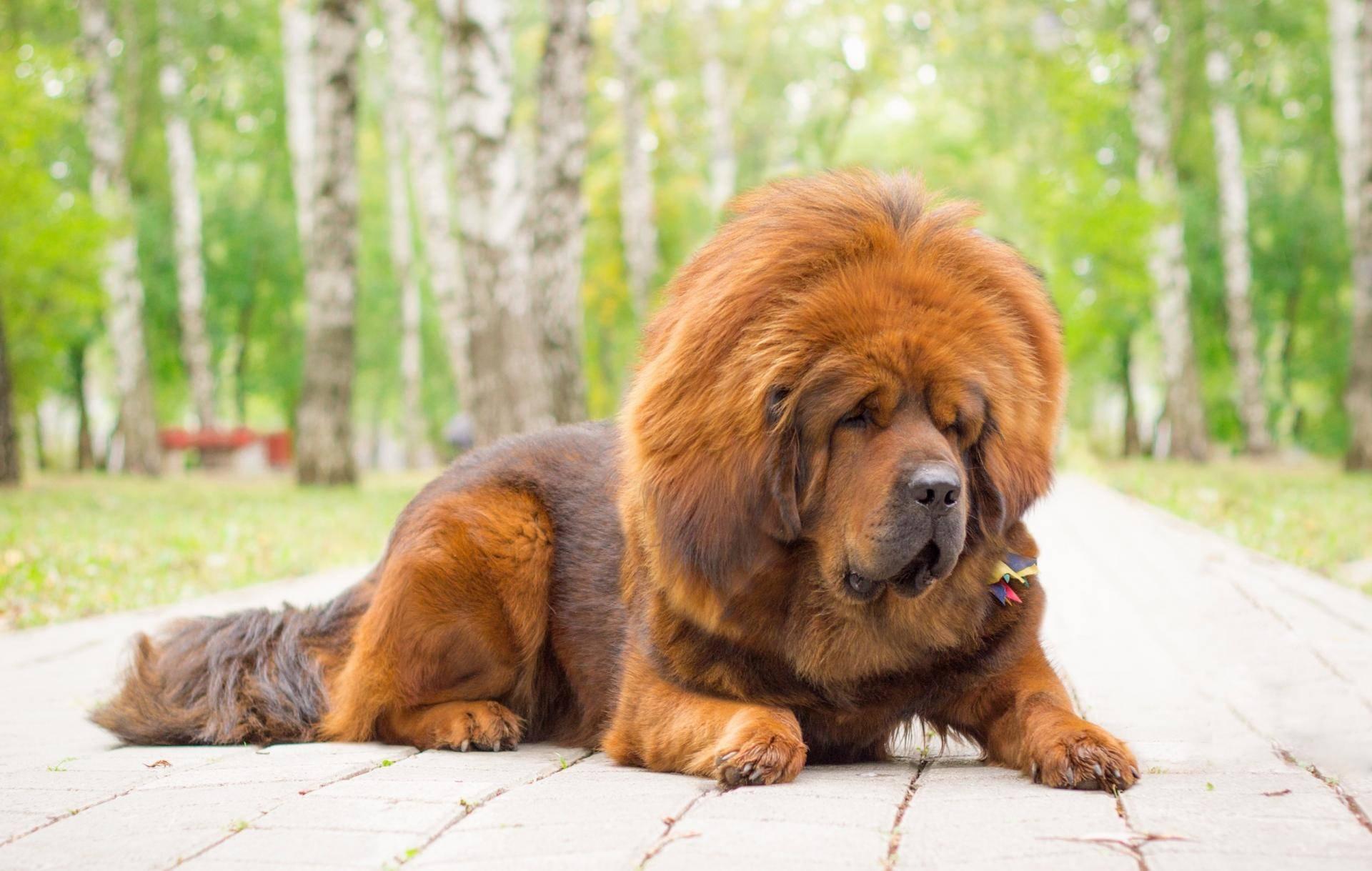 Самые добрые породы собак (38 фото): топ самых дружелюбных, добродушных и ласковых псов в мире, список пород с названиями